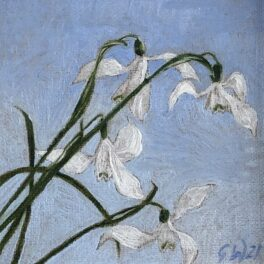 Snowdrops I by Gill Wilson